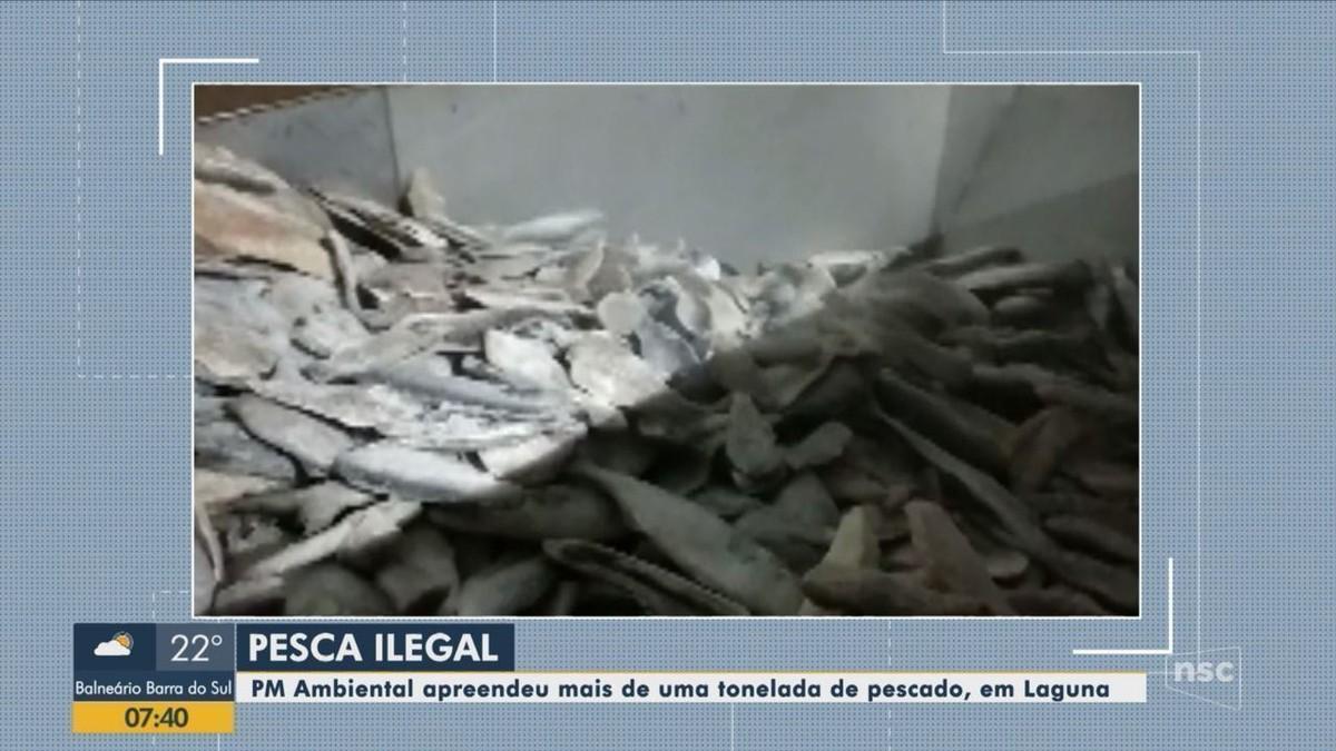 Polícia apreende mais de uma tonelada de pescado ilegal em Laguna - G1