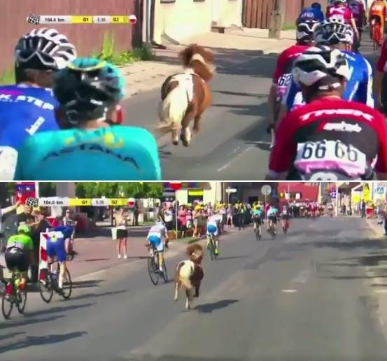 Pônei 'participa' da Volta da Polônia de ciclismo