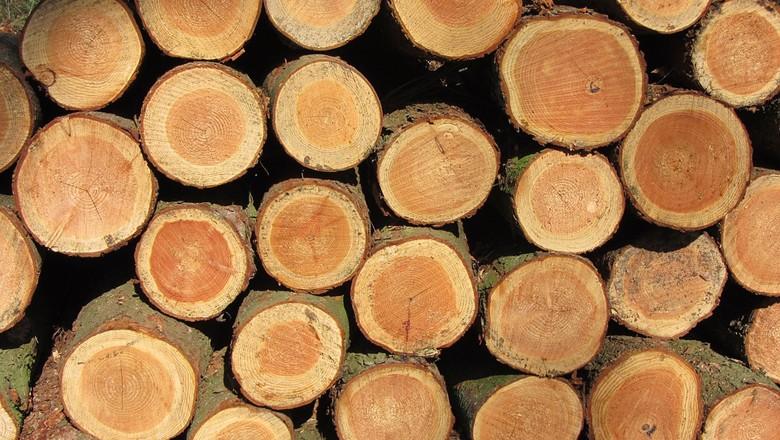 madeira-tora (Foto: Pixabay)