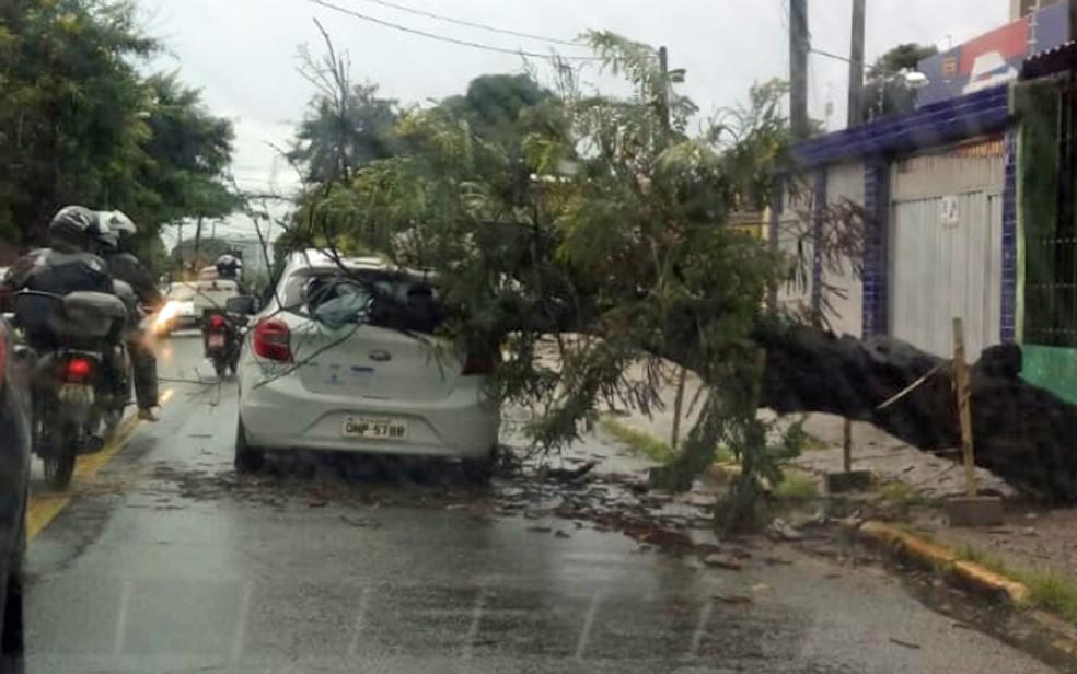 Árvore caiu e atingiu carro na Rua Odorico Mendes, no Recife, nesta quarta-feira (6) — Foto: Reprodução/WhatsApp