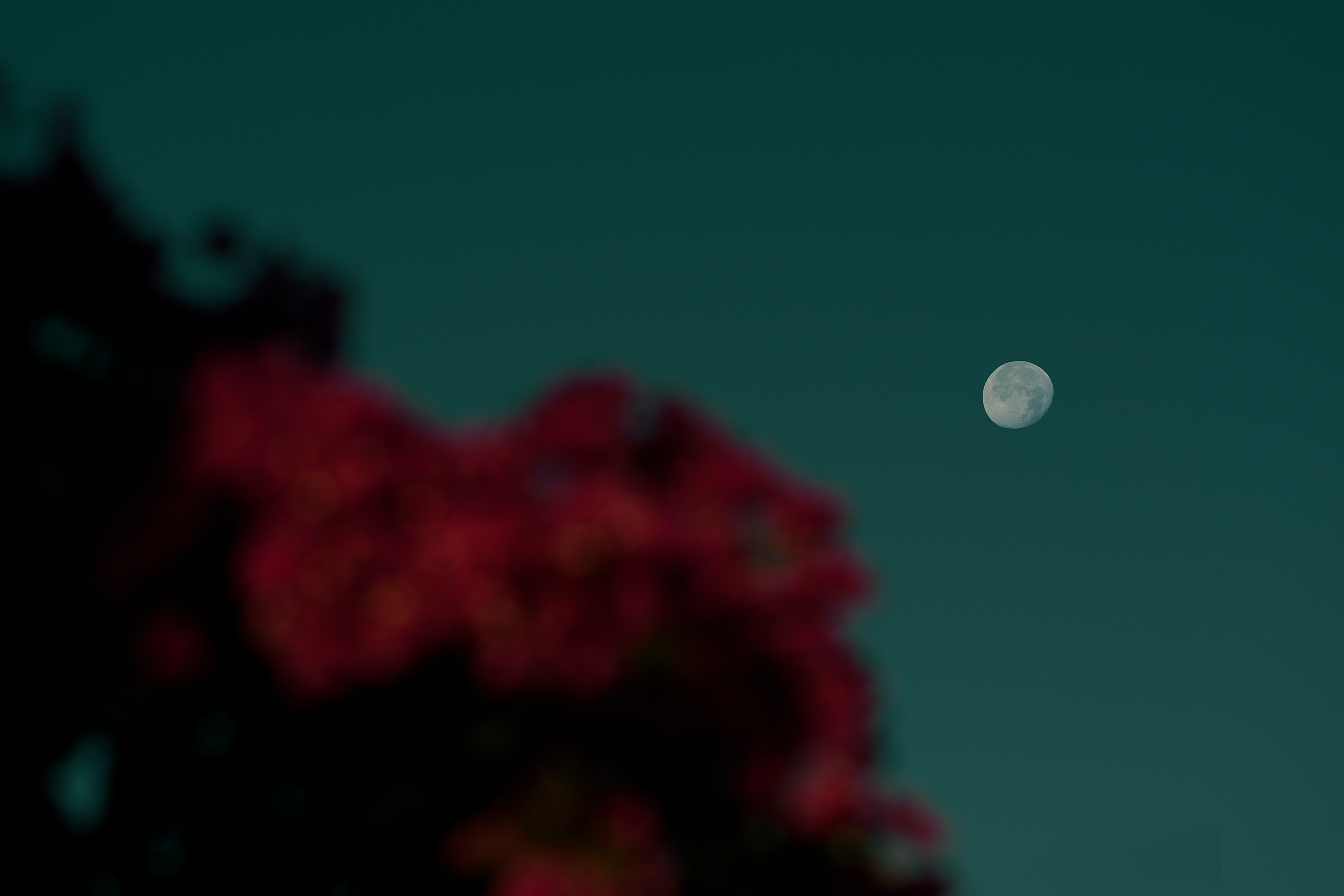 Céu do mês: ocultação de Marte pela Lua e início da primavera iluminam setembro (Foto: Jean-Joseph Napoléon/Unsplash)