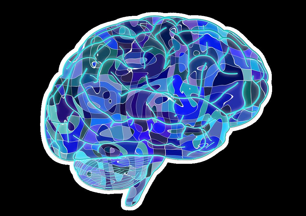 A irisina tem efeitos protetores sobre o cérebro. — Foto: Pixabay