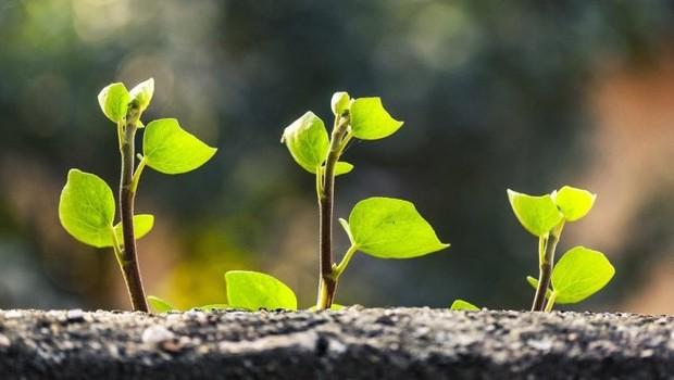 Meio ambiente ; negócio de impacto ambiental ; sustentabilidade ;  (Foto: Thinkstock)