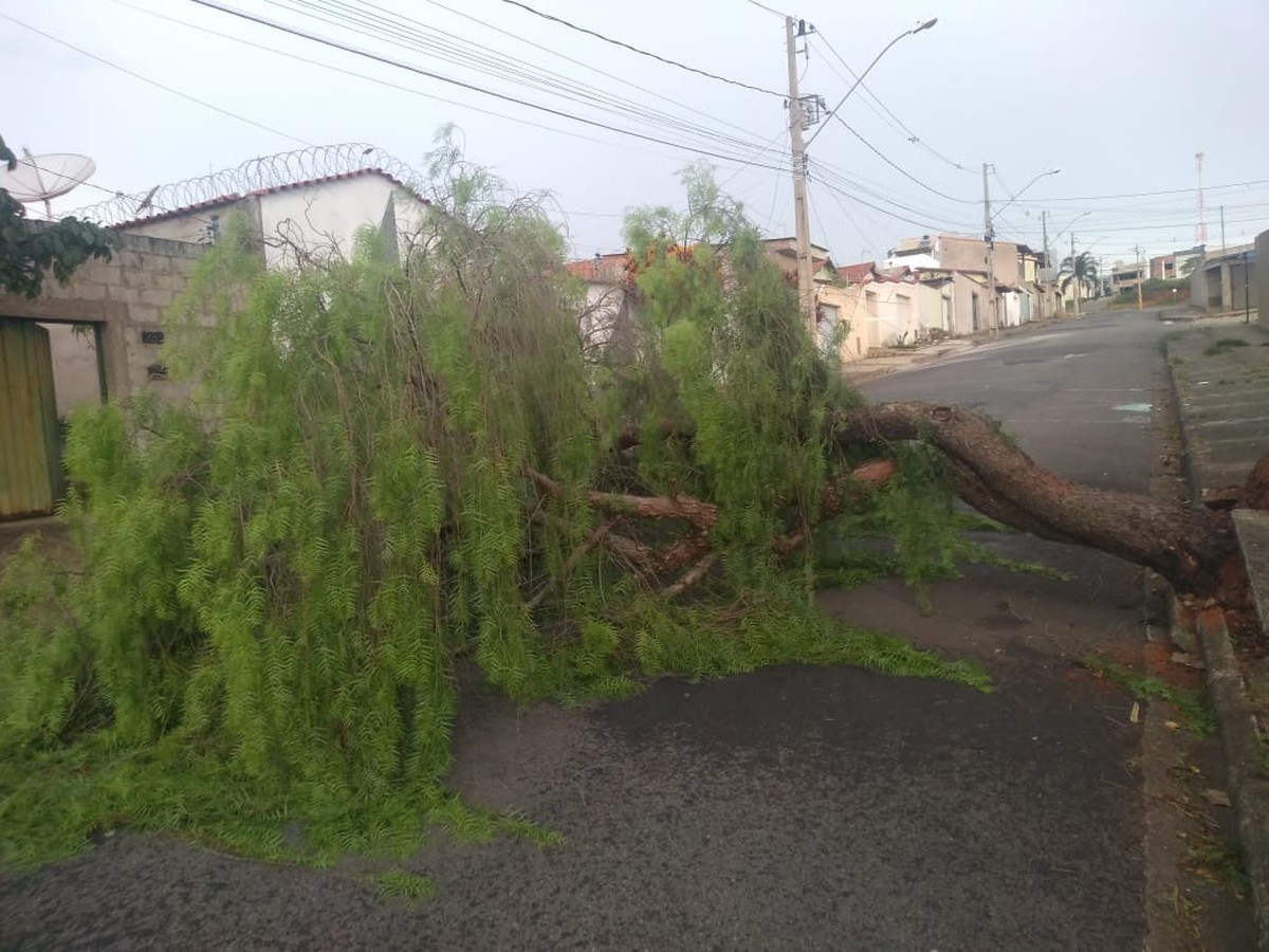 Vendaval derruba árvores e deixa bairros sem energia elétrica em Varginha, MG - G1