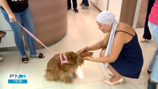 A importância do diagnóstico precoce para o câncer de mama nos cães