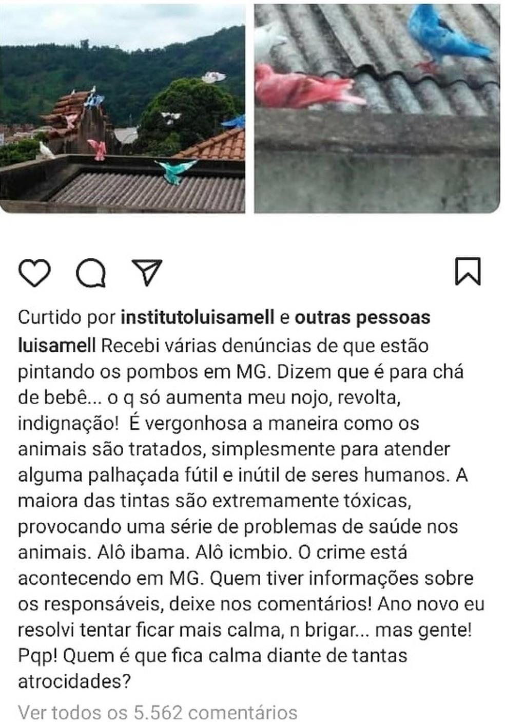 Luísa Mell denuncia pombos tingidos em Leopoldina — Foto: Instagram/Reprodução