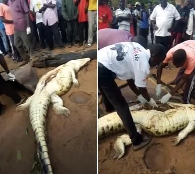A criança estava no estômago do crocodilo