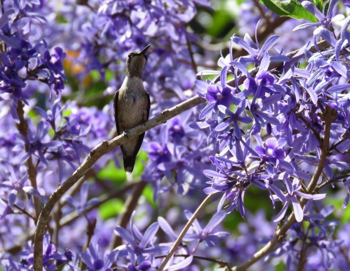 Internautas compartilham registros da natureza para celebrar a primavera