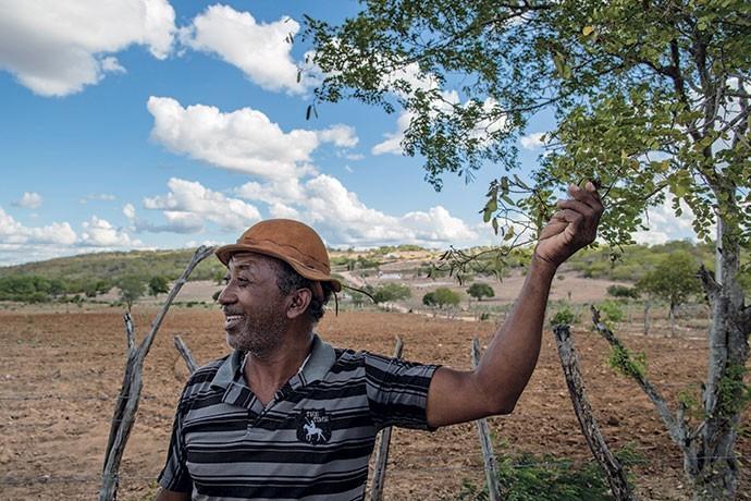 O sertanejo Benedito de Jesus pesquisa de maneira intuitiva as propriedades de diferentes plantas da Caatinga, como a emburana e a aroeira (Foto: Flávio Forner)