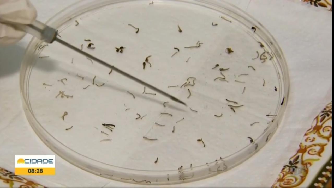 Triângulo, Alto Paranaíba e Noroeste de MG registram mais de 500 casos de dengue entre novembro e início de 2021