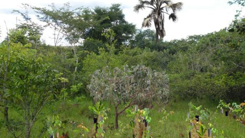 embrapa-código-florestal (Foto: Embrapa/Divulgação)