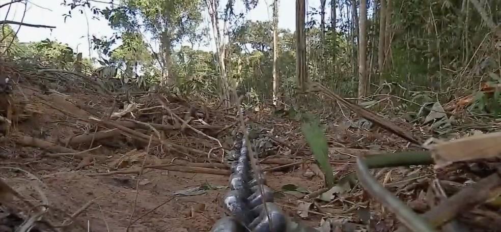 Operação para combater o desmatamento e extração ilegal de madeira foi realizada nessa terça-feira (12) em Tapurah (Foto: TV Centro América)
