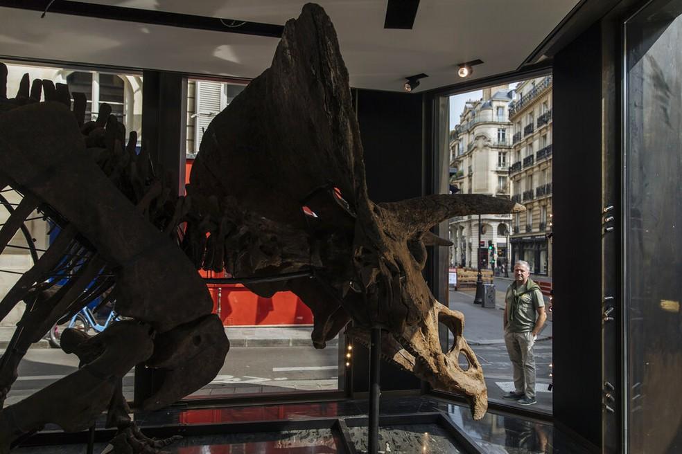 Esqueleto do tricerátops que será exibido em Paris antes de ser leiloado. — Foto: Lewis Joly/AP