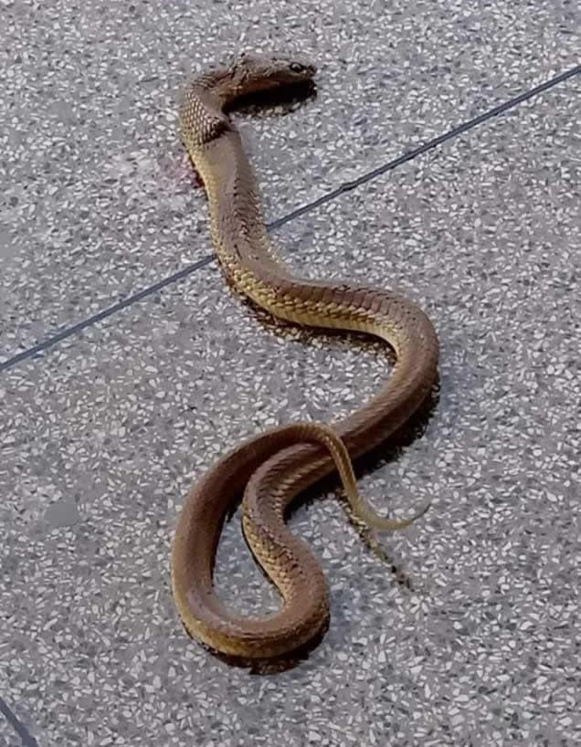 Cobra é encontrada no banheiro feminino da rodoviária de Paty do Alferes - Notícias - Plantão Diário