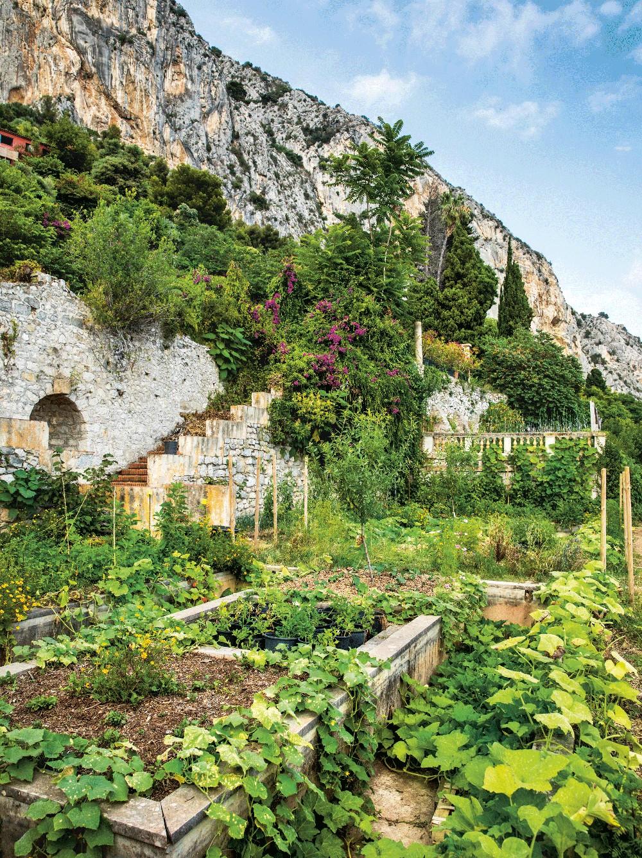 A horta do Mirazur no sul da França (Foto: Divulgação)