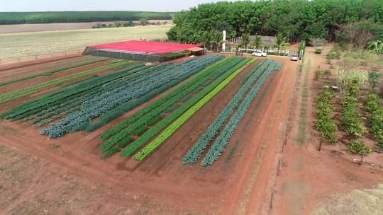Produtores de hortaliças investem em parcerias no noroeste paulista
