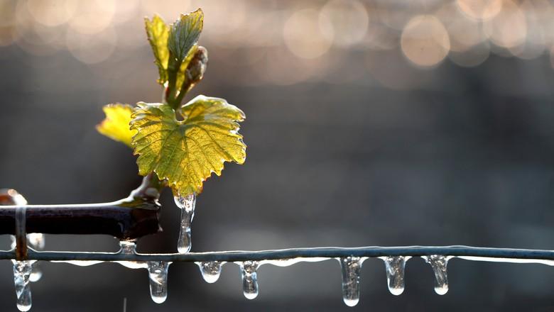 Gotas e folha congeladas pelo frio (Foto: REUTERS/Christian Hartmann)