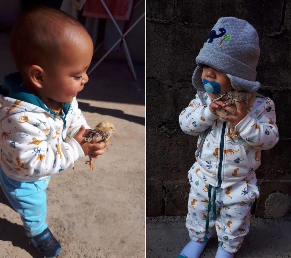 Romeo chegou na casa de Benício em maio deste ano em Botucatu — Foto: Arquivo pessoal/Josiane Frazão
