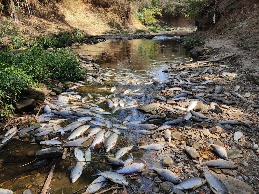 Moradores registram peixes mortos em trecho do Rio Tietê na SP 75 em Salto  — Foto: Arquivo pessoal