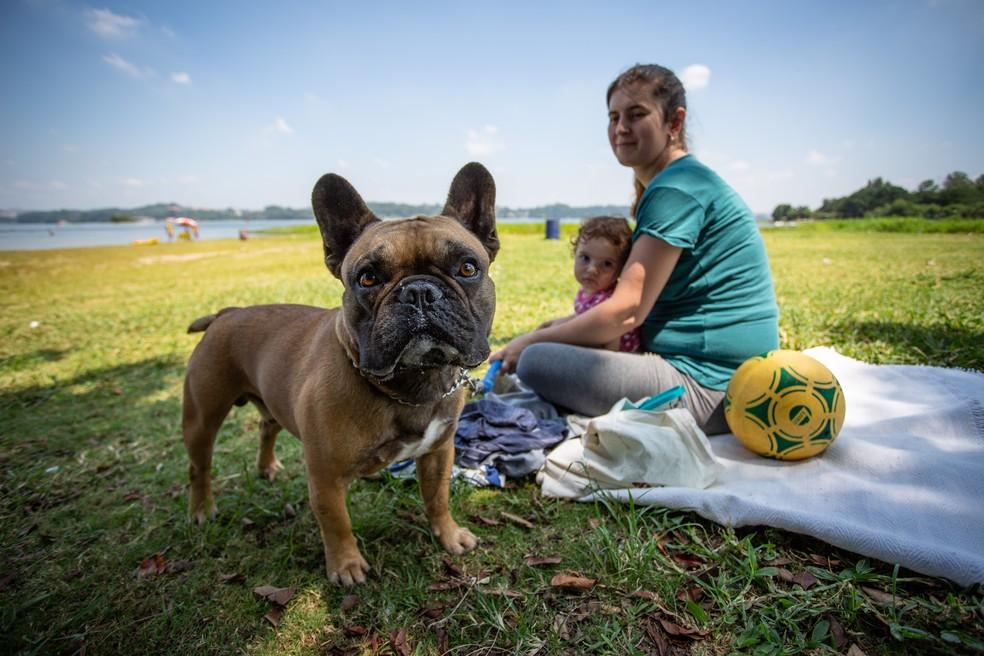 Cachorro na Praia do Sol, na Represa Guarapiranga, em SP — Foto: Fábio Tito/G1