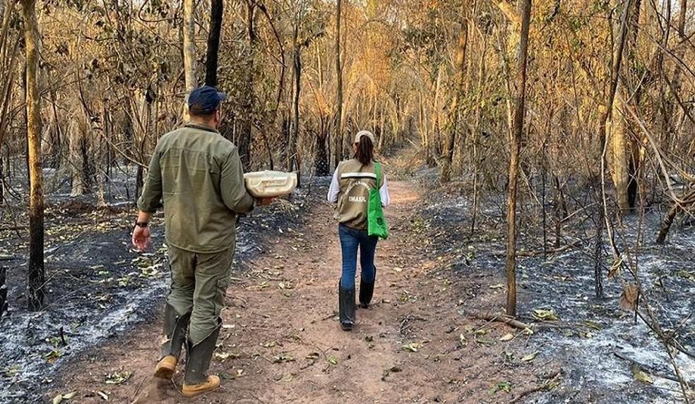 Pesquisadores participam de força-tarefa para contabilizar animais mortos pelas queimadas no Pantanal. — Foto: Semagro/Divulgação