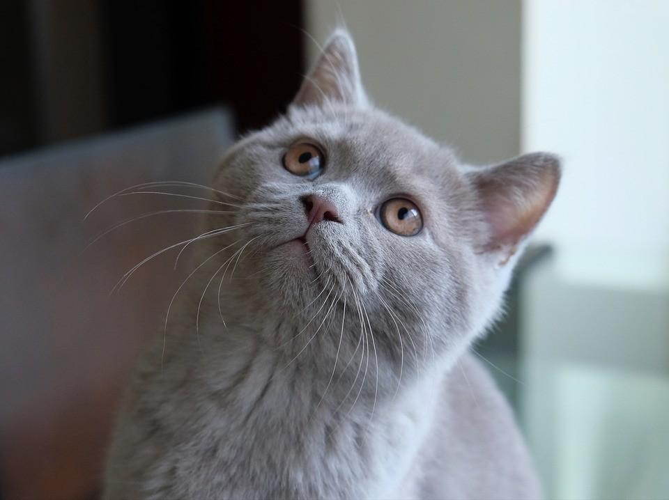 Gatos sabem o nome que você o chama... (Foto: Max Pixel/Creative Commons)