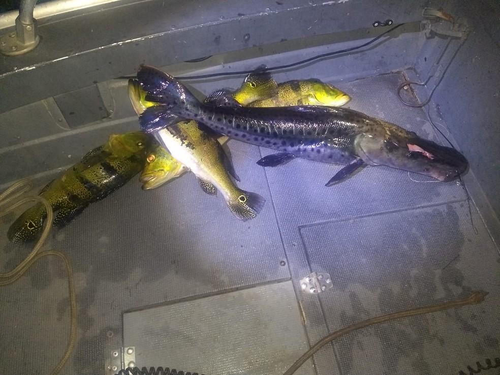 Polícia Ambiental apreendeu peixes e materiais utilizados em pescaria irregular — Foto: Polícia Ambiental