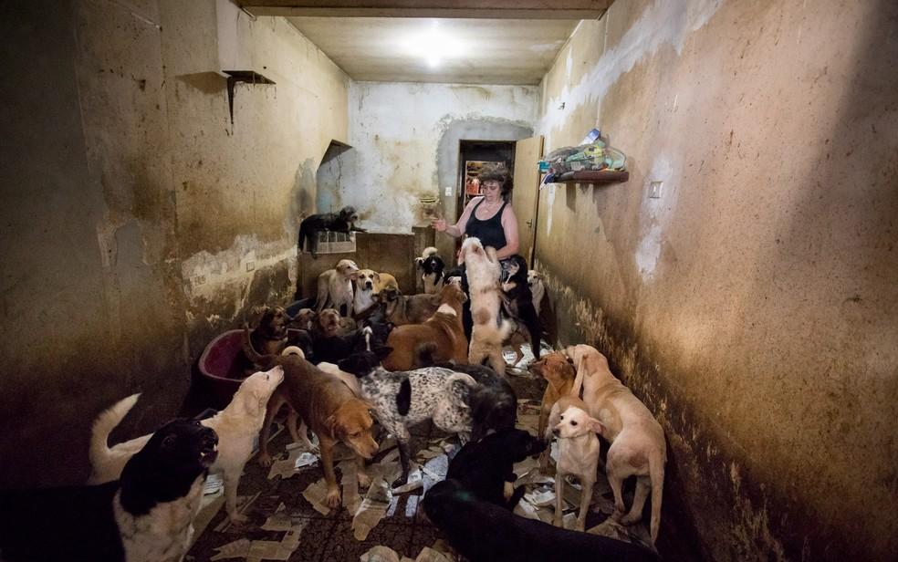 Rosângela de Abreu acolheu 84 cães em sua casa, em Moema, na Zona Sul de São Paulo. Houve um problema judicial em um terreno onde ele pretendia construir uma ONG (Foto: Marcelo Brandt/G1)