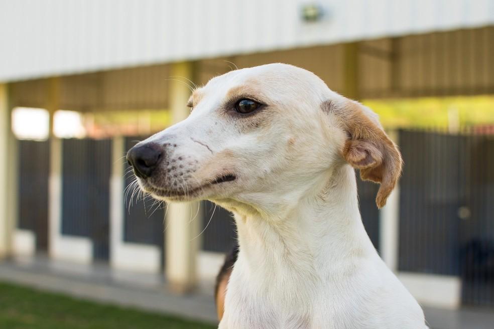 Animais receberam cuidados antes de serem colocados para adoção — Foto: Divulgação/Prefeitura Barra do Piraí