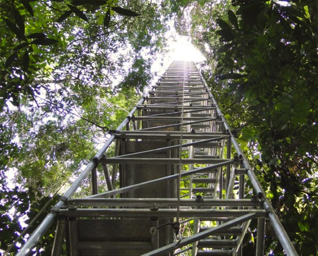 Torre usada para pesquisas científicas na Amazônia; nova estrutura terá 320 metros, maior do que a Torre Eiffel, na França (Foto: Divulgação/ATTO)