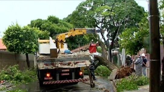 Chuva causa quedas de árvores e alagamentos na região de Presidente Prudente