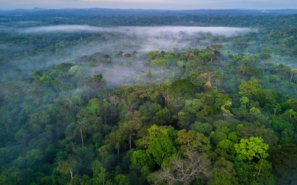 A importância da conservação da Amazônia para o modelo de negócio das  empresas - Época Negócios | Natura