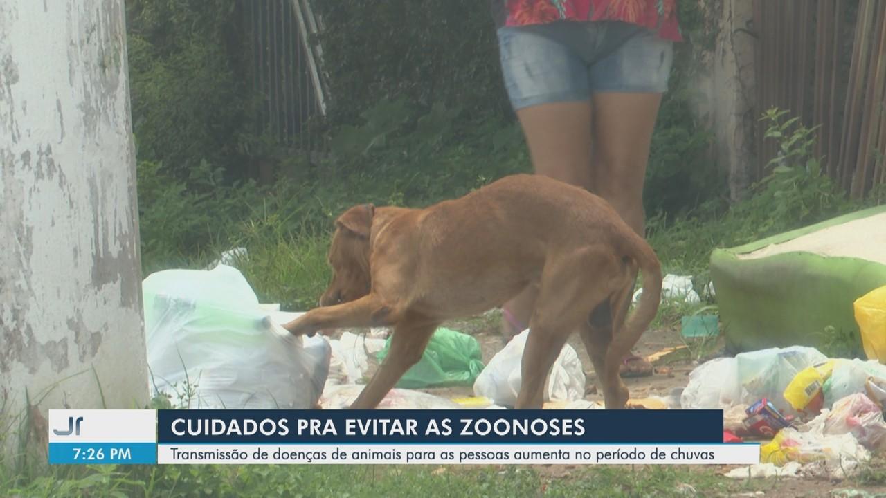 Transmissão de doenças de animais para as pessoas aumenta no período de chuvas