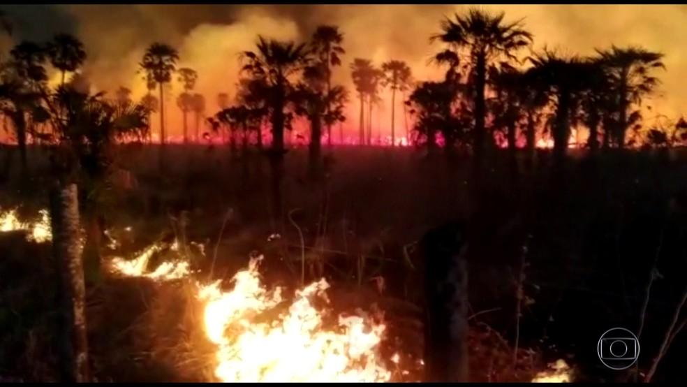 Queimadas no Pantanal destroem matas — Foto: JN