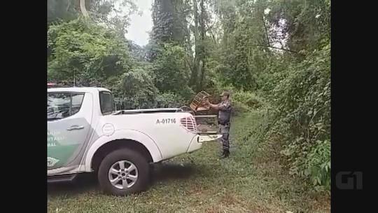 Polícia Ambiental encontra 11 aves em cativeiro e multa dono em R$ 8,5 mil
