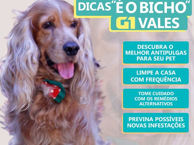 Guilherme DiOliveira/ InterTV dos Vales (Foto: Saiba como proteger seu animal de estimação)