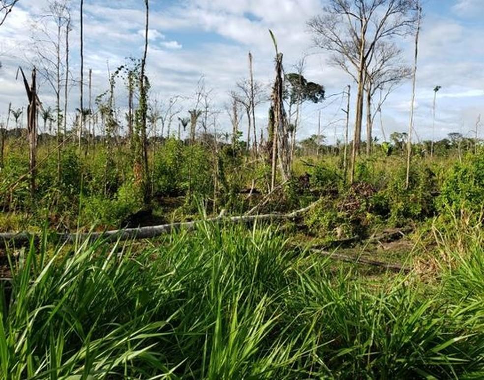 Desmatamento na região do assentamento Antimary, em Boca do Acre. — Foto: Divulgação/PF-AC