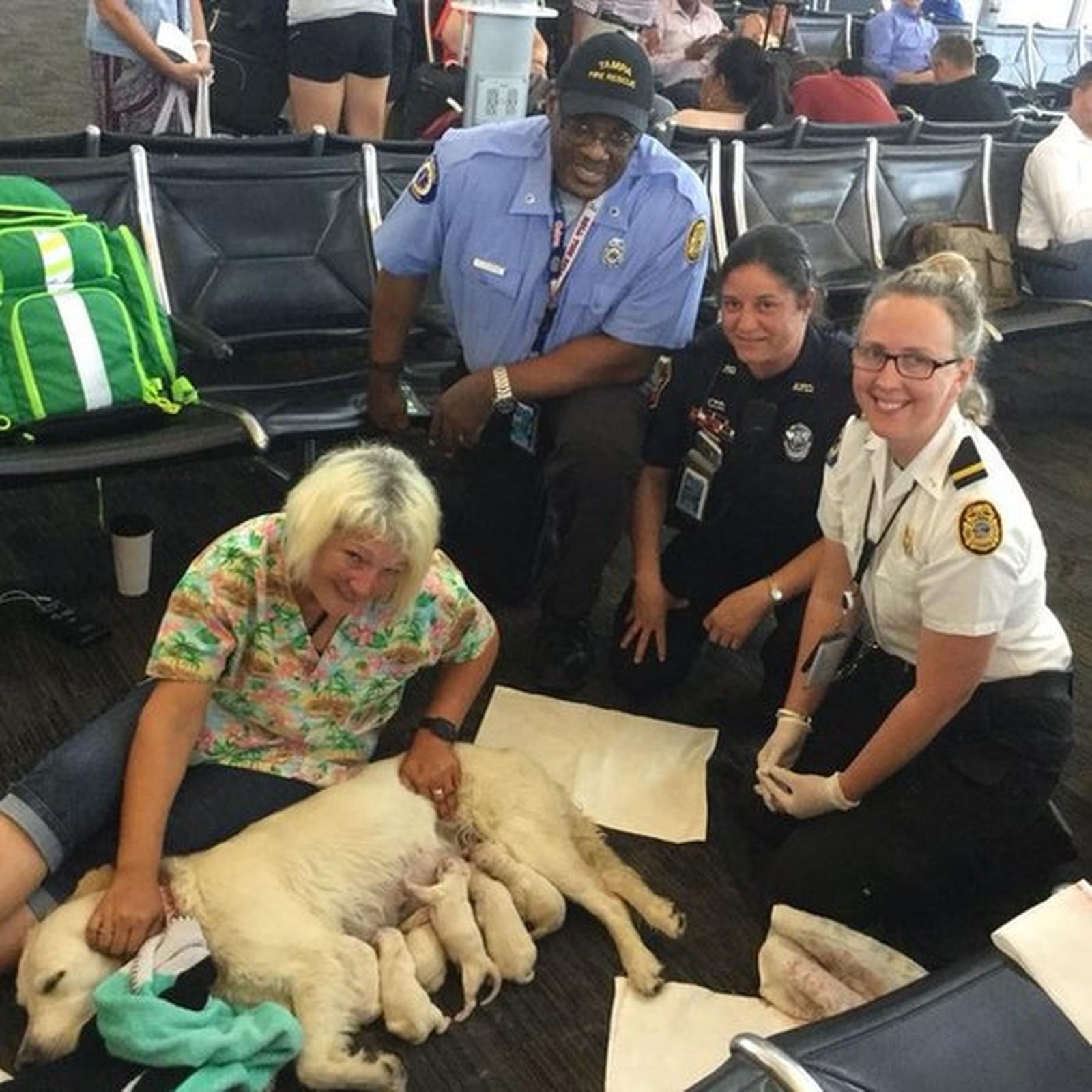 Cadela dá à luz em aeroporto
