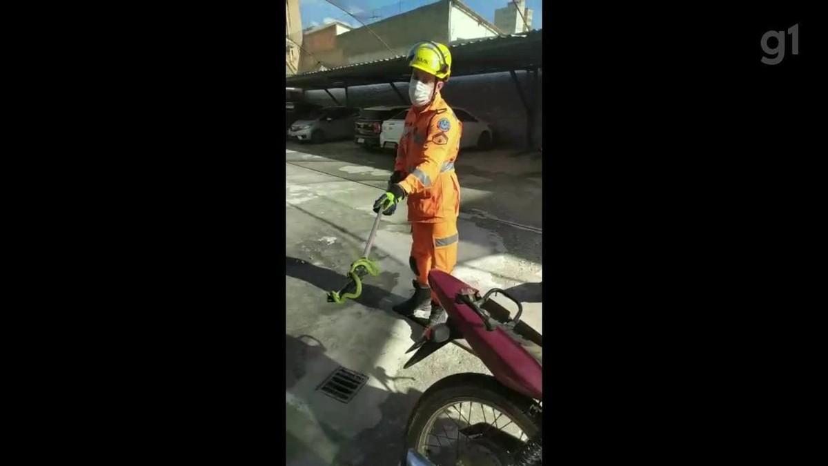 VÍDEO: Bombeiros desmontam banco de moto para retirar cobra em Montes Claros