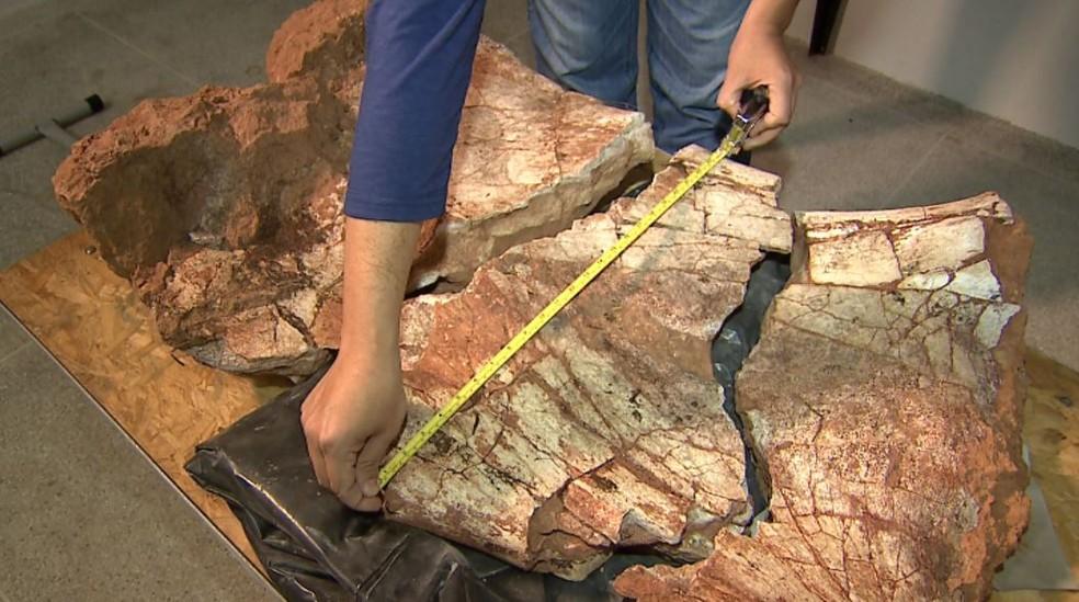 Fóssil encontrado em Monte Alto revela novo ponto de escavação para pesquisadores (Foto: Reprodução/EPTV)