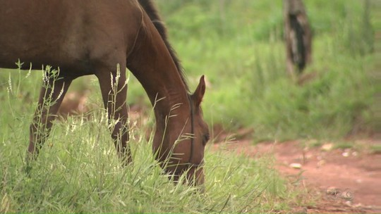 Prefeitura suspende recolhimento de cavalos após furtos em Ponta Grossa