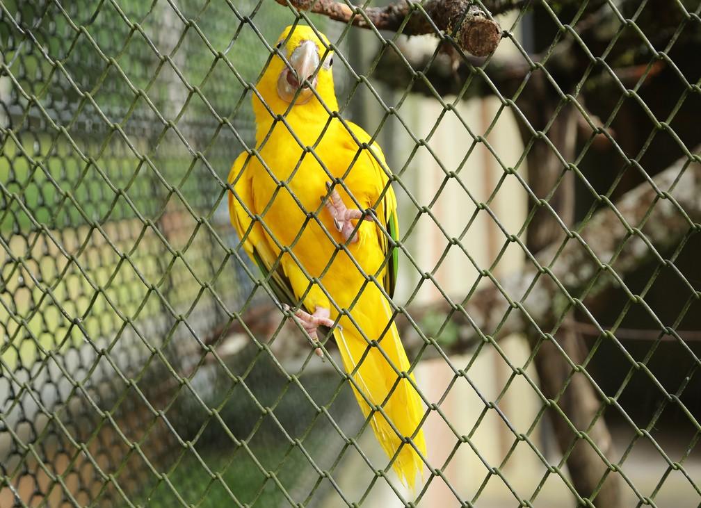 Aves recebem tem uma espécie de chuveirinho nos recintos para resistir ao calor intenso  — Foto: Giuliano Gomes/PR Press