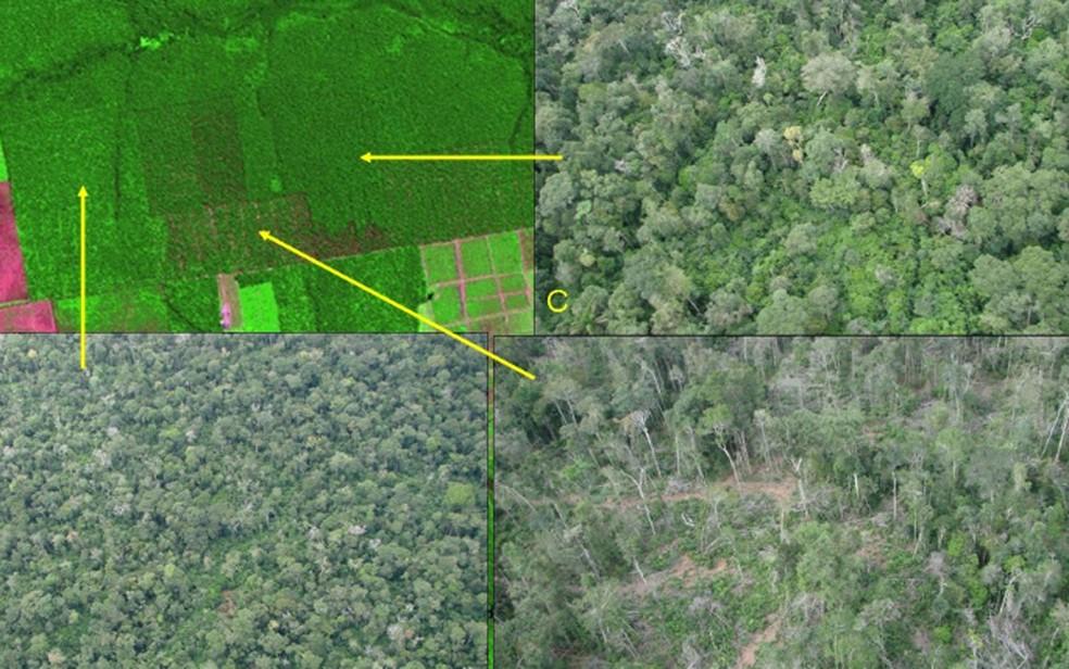 Desmatamento na Amazônia: reprodução de imagem de satélite mostra o comparativo na variação de tonalidades de verde da imagem de satélite (à esquerda, no topo) e das imagens reais da região degradada. — Foto: Reprodução/Inpe