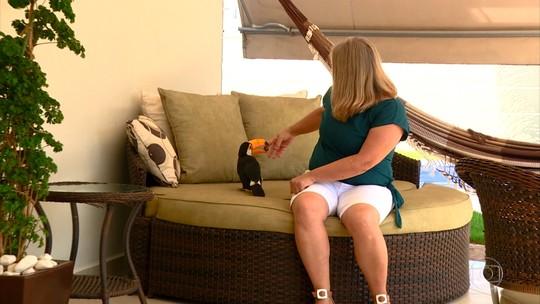 Fêmea de tucano vira mascote de condomínio em Campinas (SP)