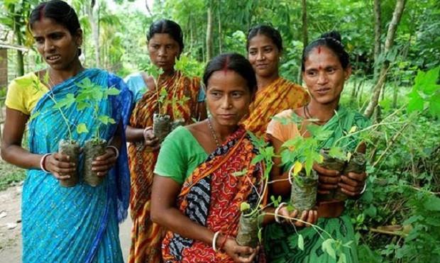 Em Piplantri, toda vez que uma menina nasce, 111 árvores são plantadas (Foto: Reprodução/Pinterest)
