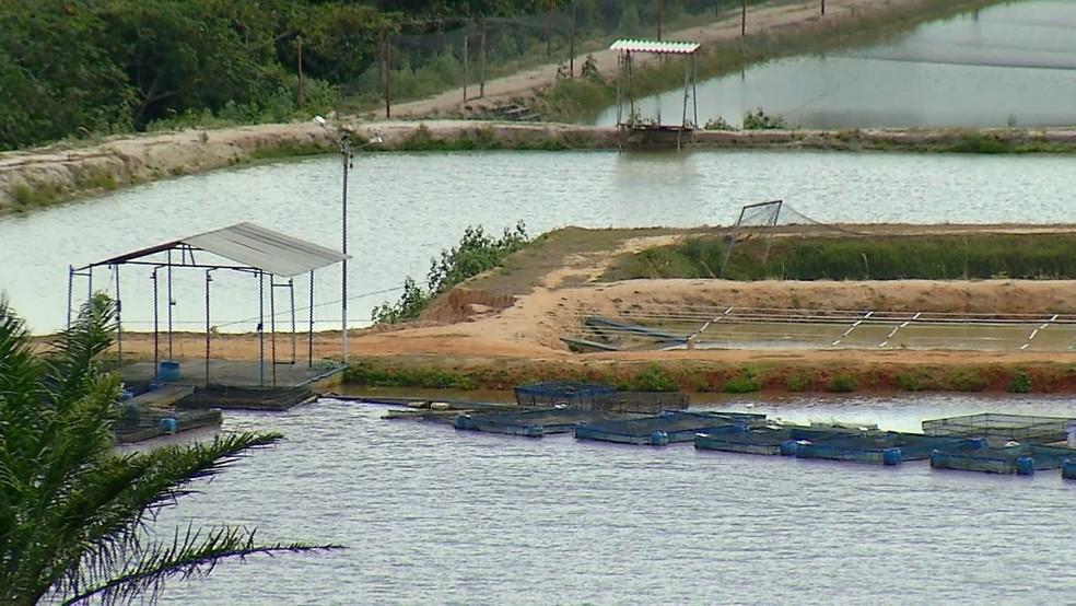 Produção econômica e preservação ambiental andam lado a lado em fazenda de Brejinho, no RN (Foto: Reprodução/Inter TV Cabugi)