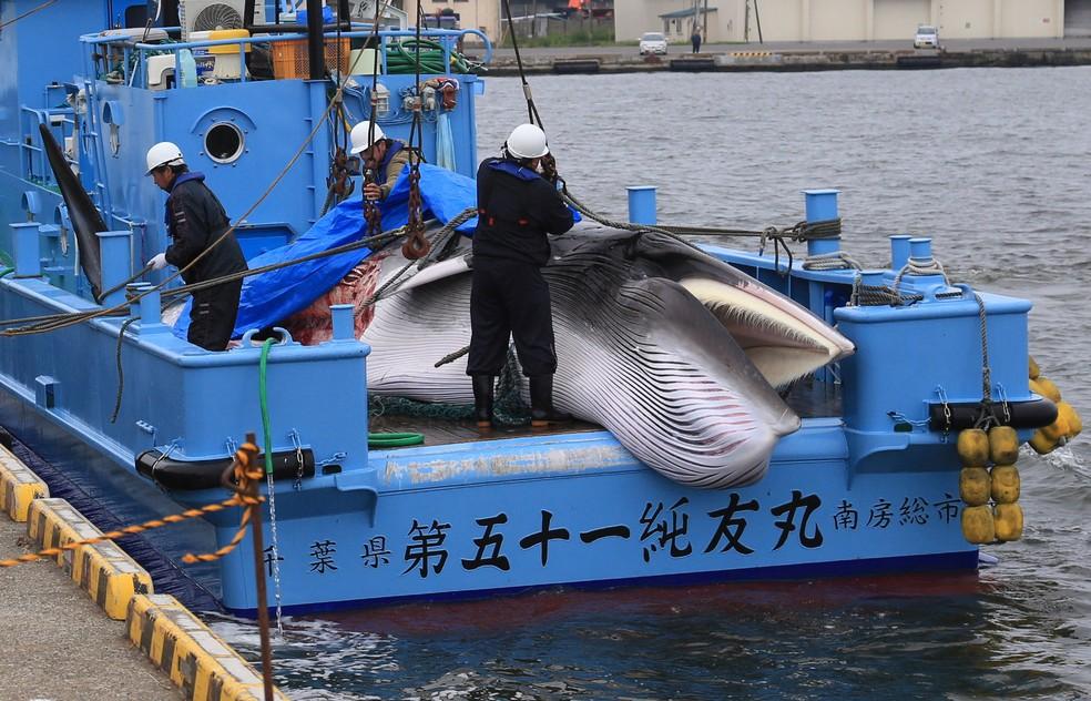 Trabalhadores preparam-se para descarregar uma baleia minke capturada em 1º de julho, em porto em Kushiro, em Hokkaido, no Japão  — Foto: Masashi Kato/ Reuters