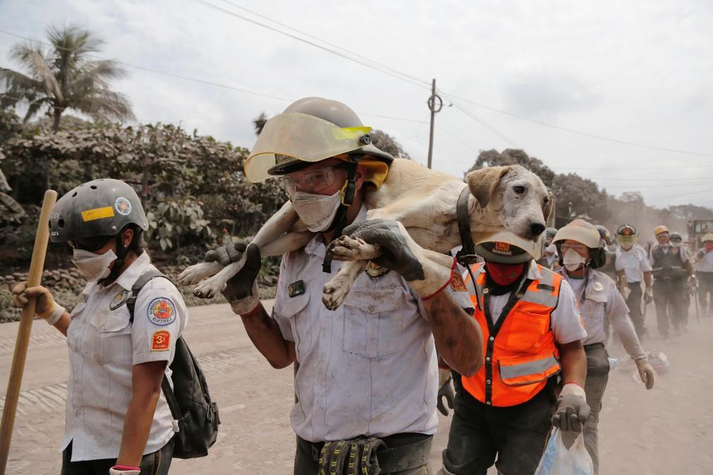 Bombeiro carrega cão resgatado na localidade de San Miguel Los Lotes após a erupção do Vulcão de Fogo (Foto: Reuters/Luis Echeverria)