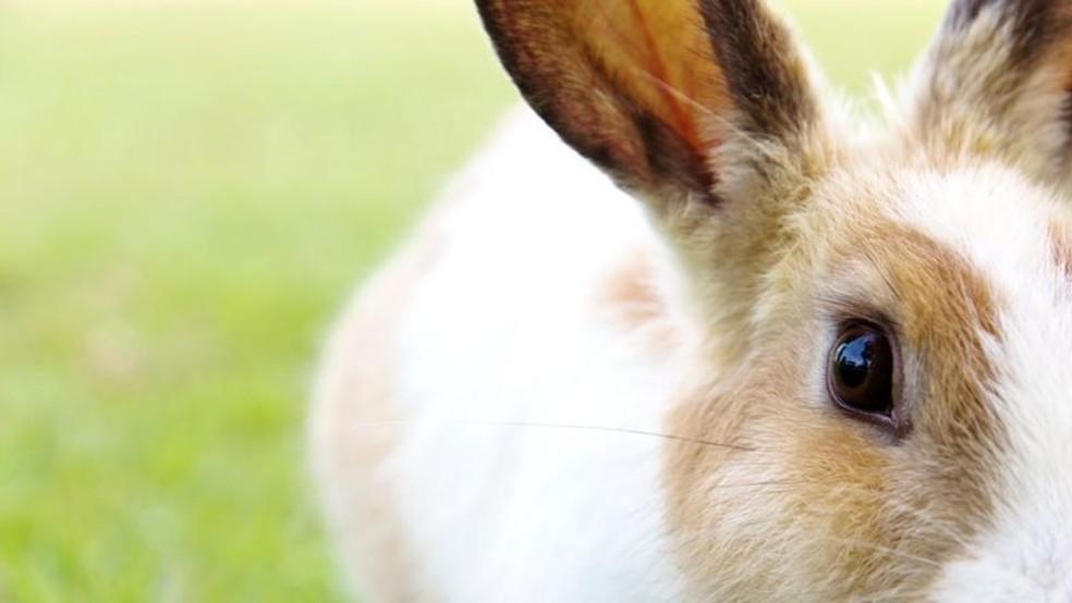 Desde o Egito antigo, o coelho já era sinônimo de fertilidade — Foto: Getty Images via BBC