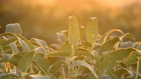 'Meu Paraná' mostra a influência da soja no interior do estado
